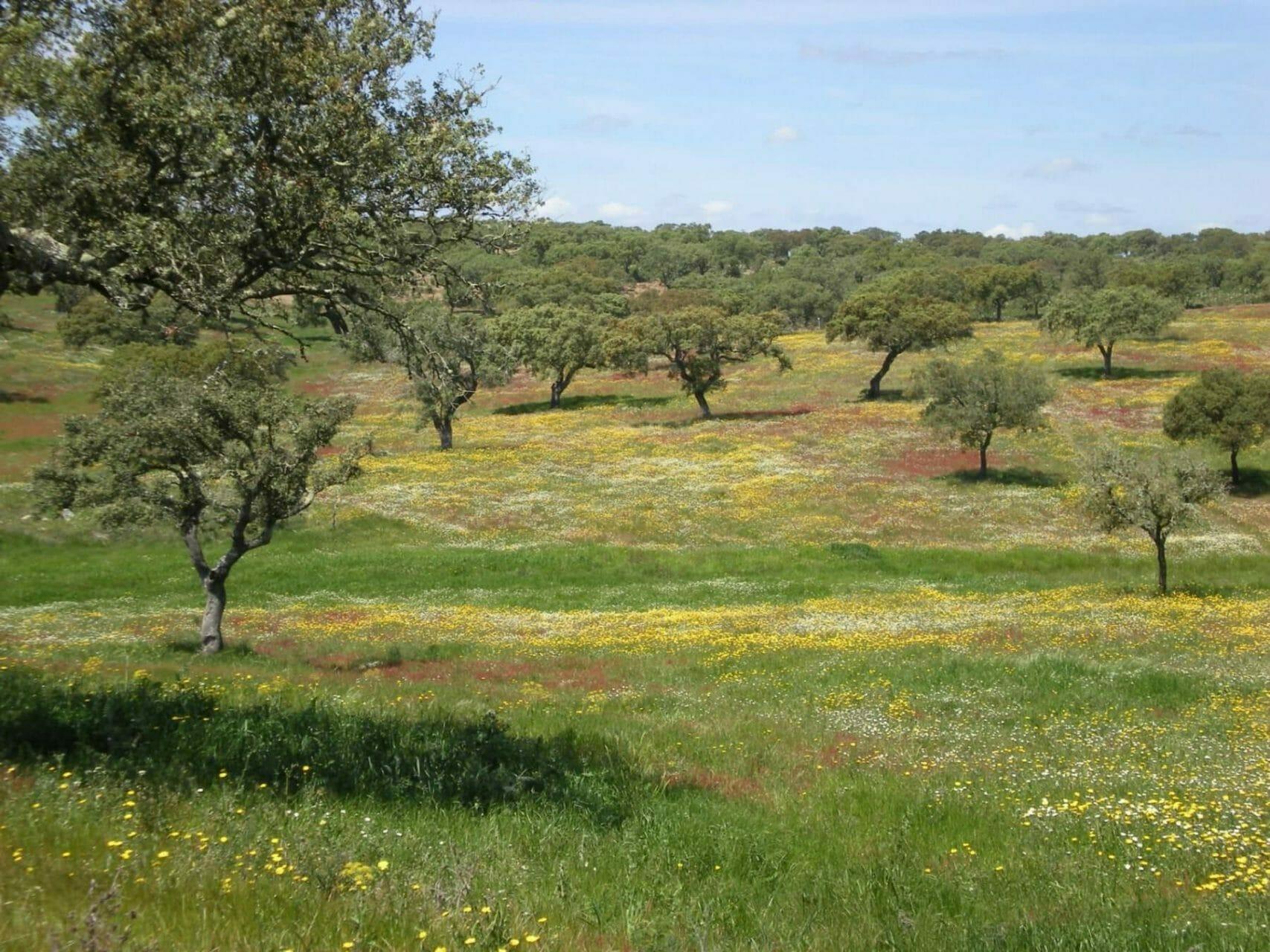 Blühennde Frühlingswiese im Algarve Hügelland
