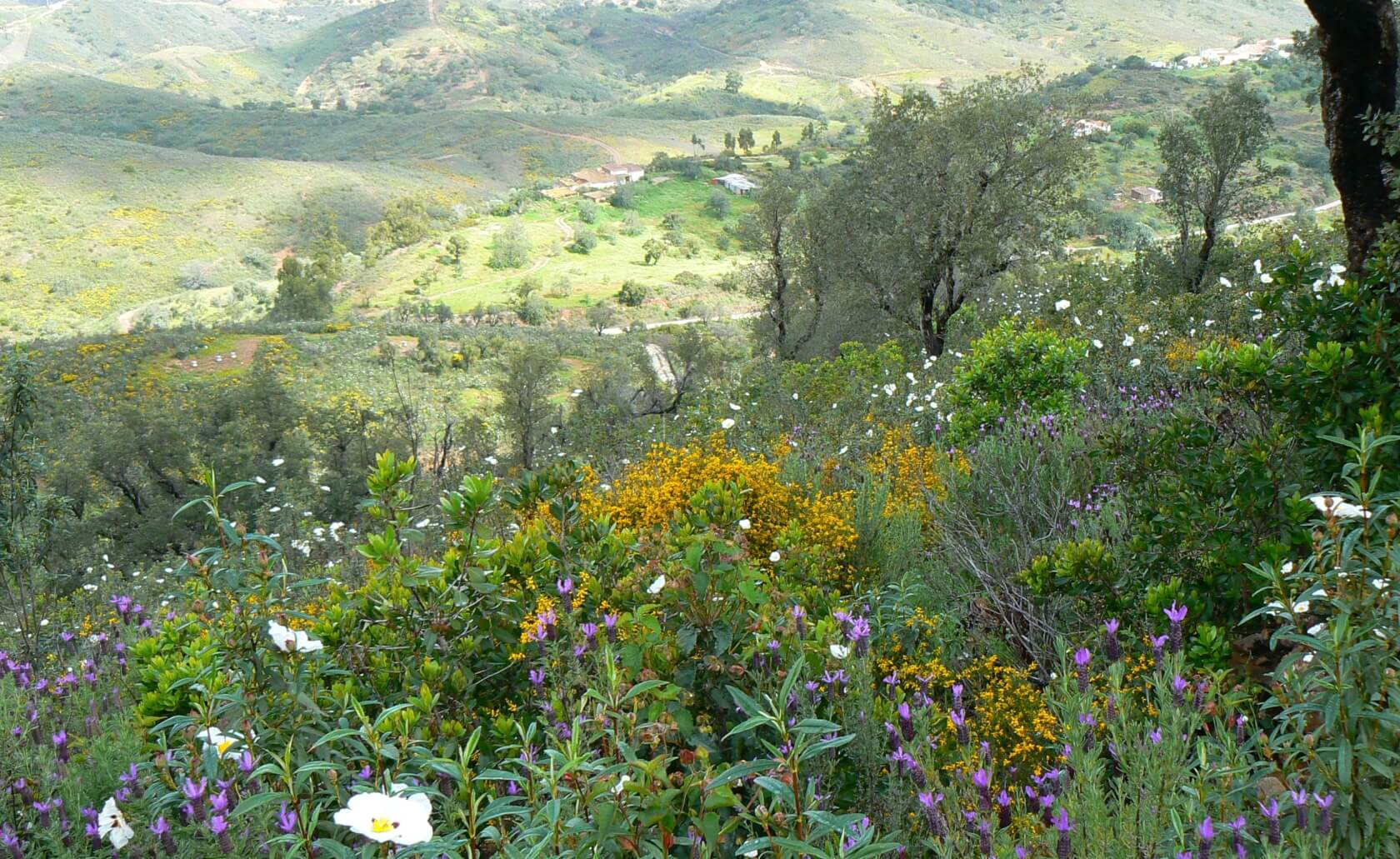 Blick über Frühlingsblüten ins Vale Fuzeiros