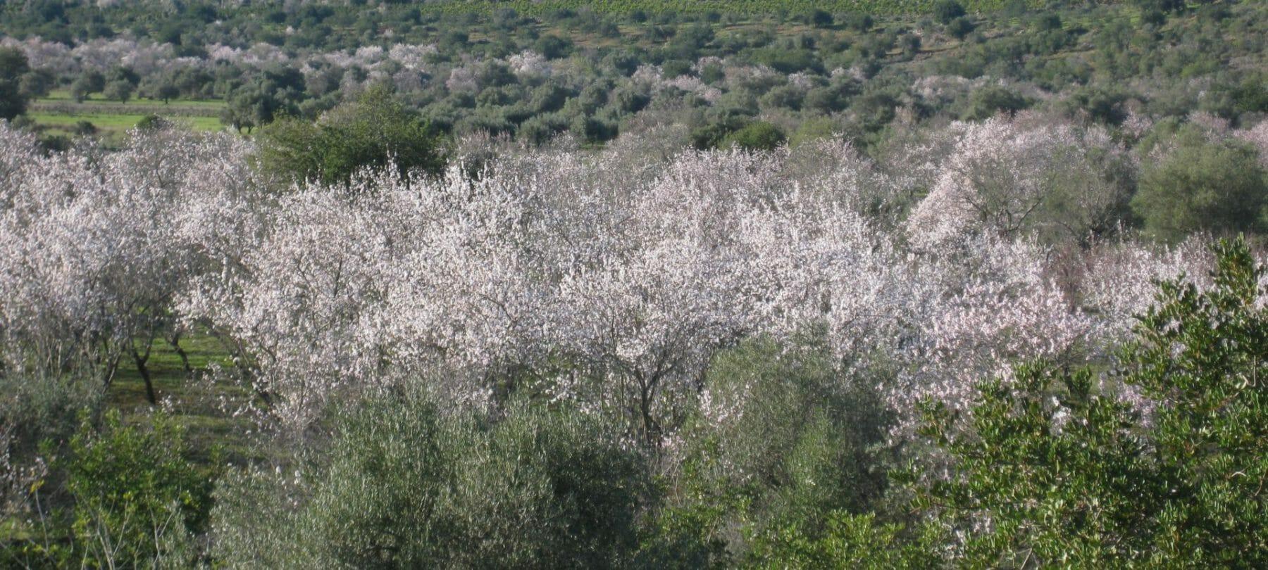 Yoga Woche - Mandelblüte an der Algarve