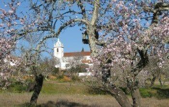 Yogaferien zur traumhaften Algarve Mandelblüte