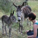 Begegnung mit Eseln in der Serra do Caldeirao