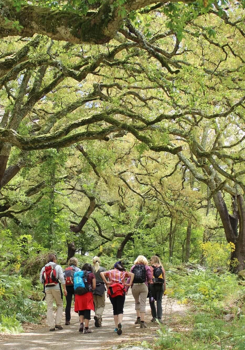 Yoga und Wandern im Korkeichenwald