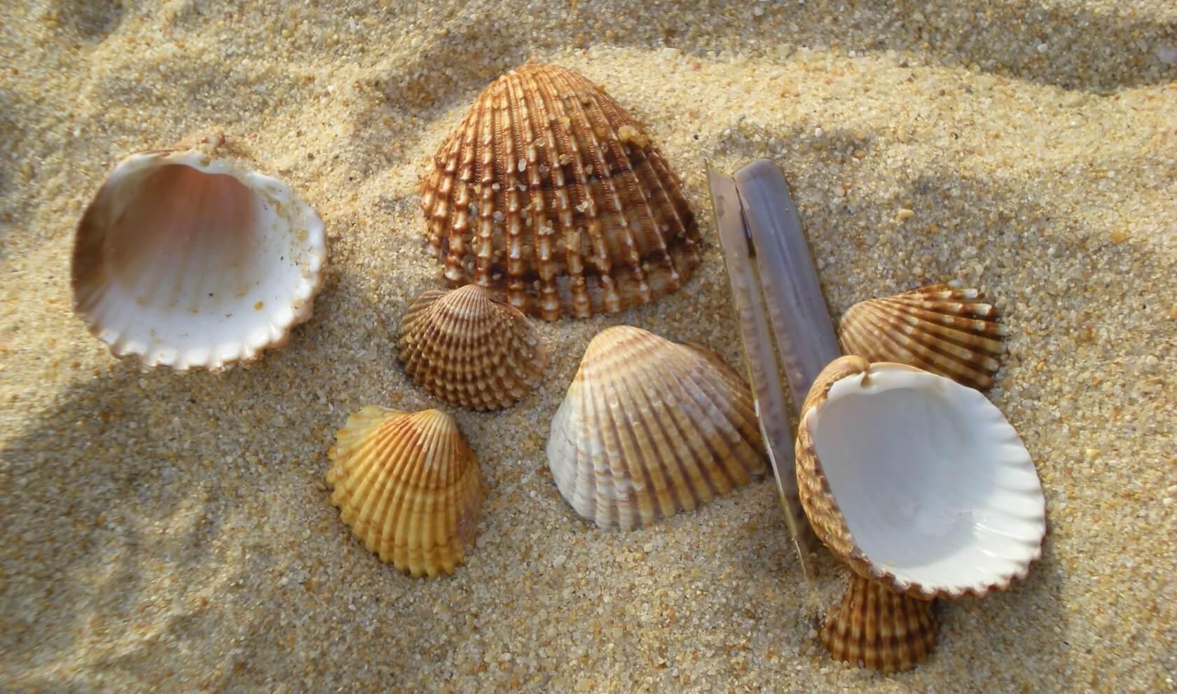 Yoga Urlaub - Muscheln am Strand