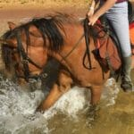 Pferd spielt mit Huf in Brandung