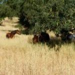 Yoga und Reiten mit guter Pferdehaltung