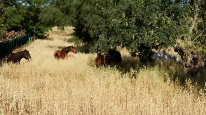 Artgerechte Offenstallhaltung macht die Pferde glücklich und entspannt