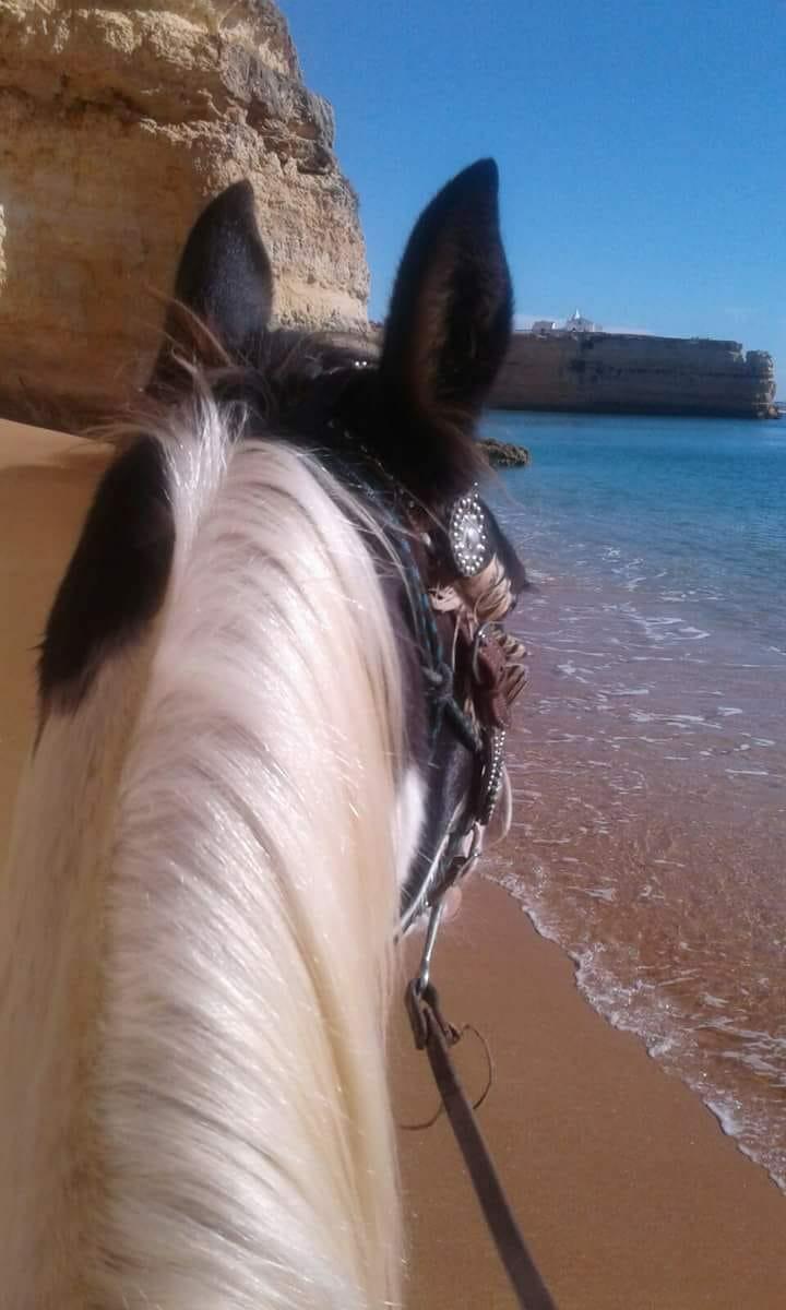 Mit dem Pferd zum Strand im Yoga und Reiten Urlaub