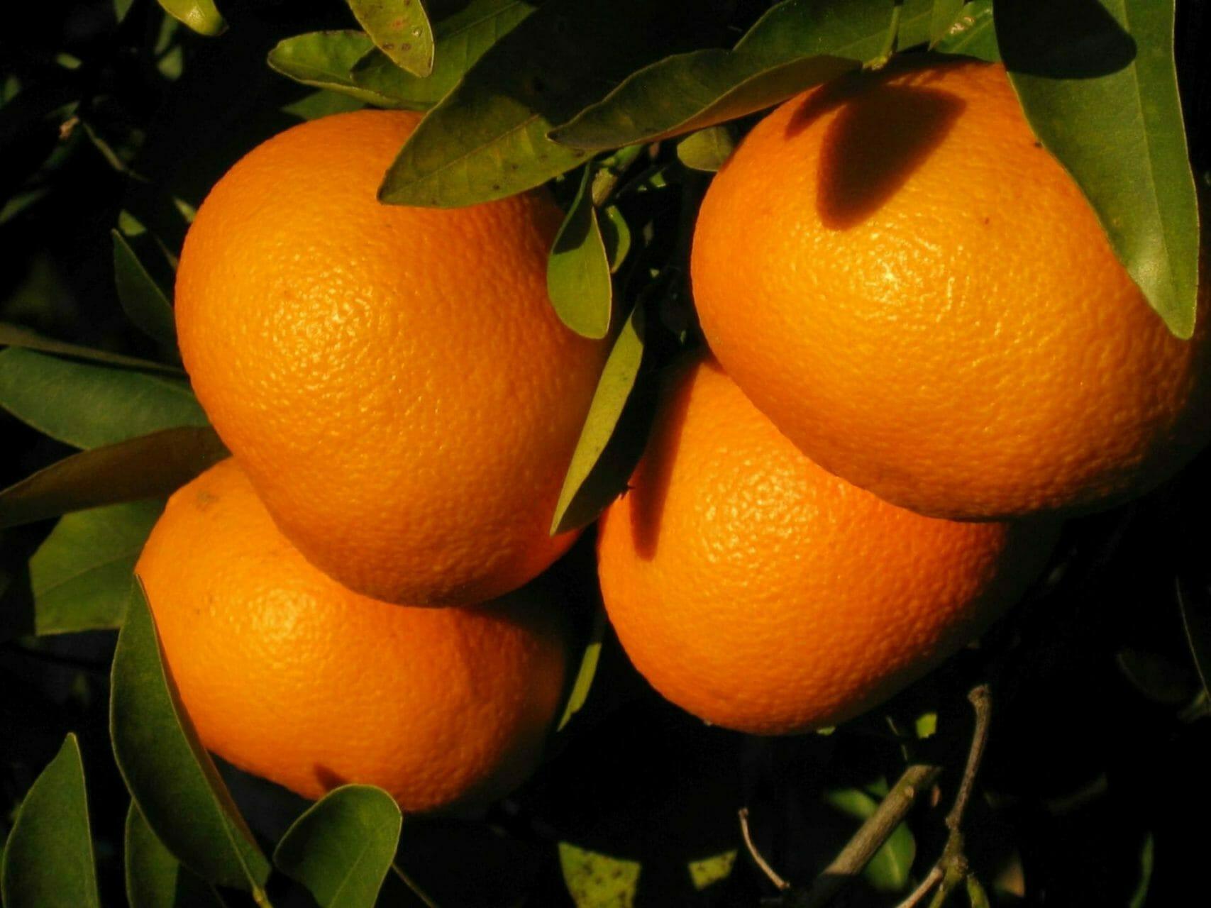 Yoga und Wandern Urlaub Orangen